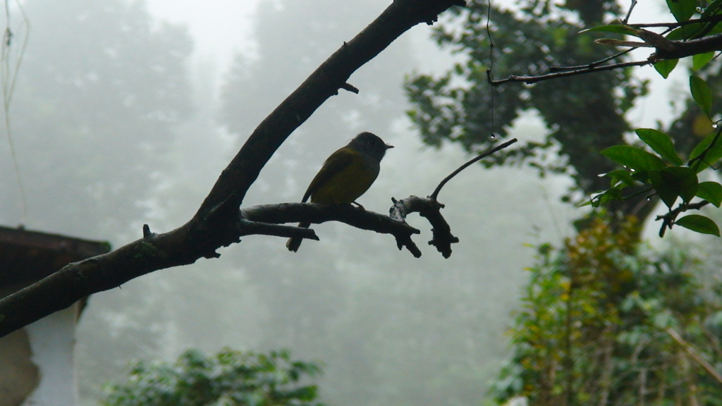 One of many varieties of birds in the rich fauna of Sri Lanka.